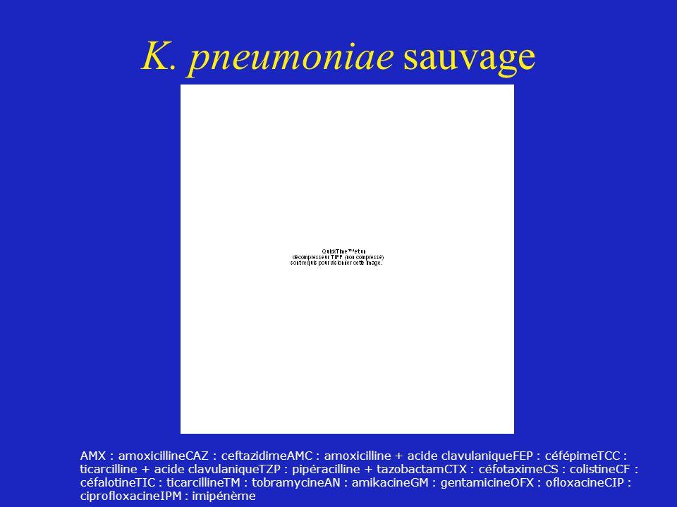 K. pneumoniae sauvage