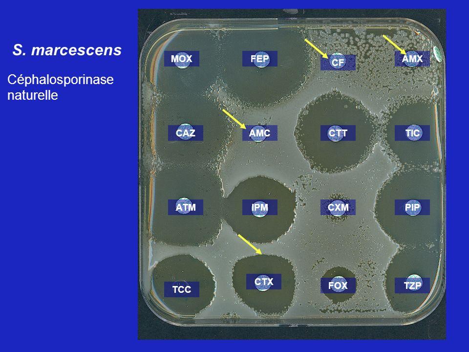 S. marcescens Céphalosporinase naturelle MOX FEP AMX CF CAZ AMC CTT