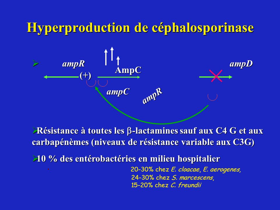 Hyperproduction de céphalosporinase