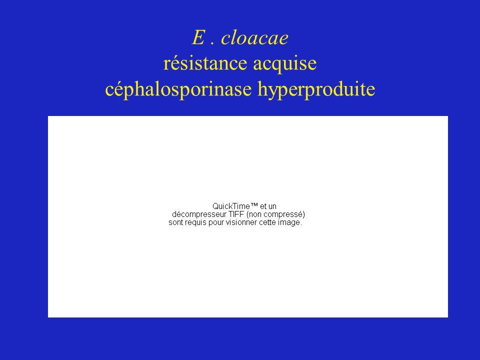 E . cloacae résistance acquise céphalosporinase hyperproduite