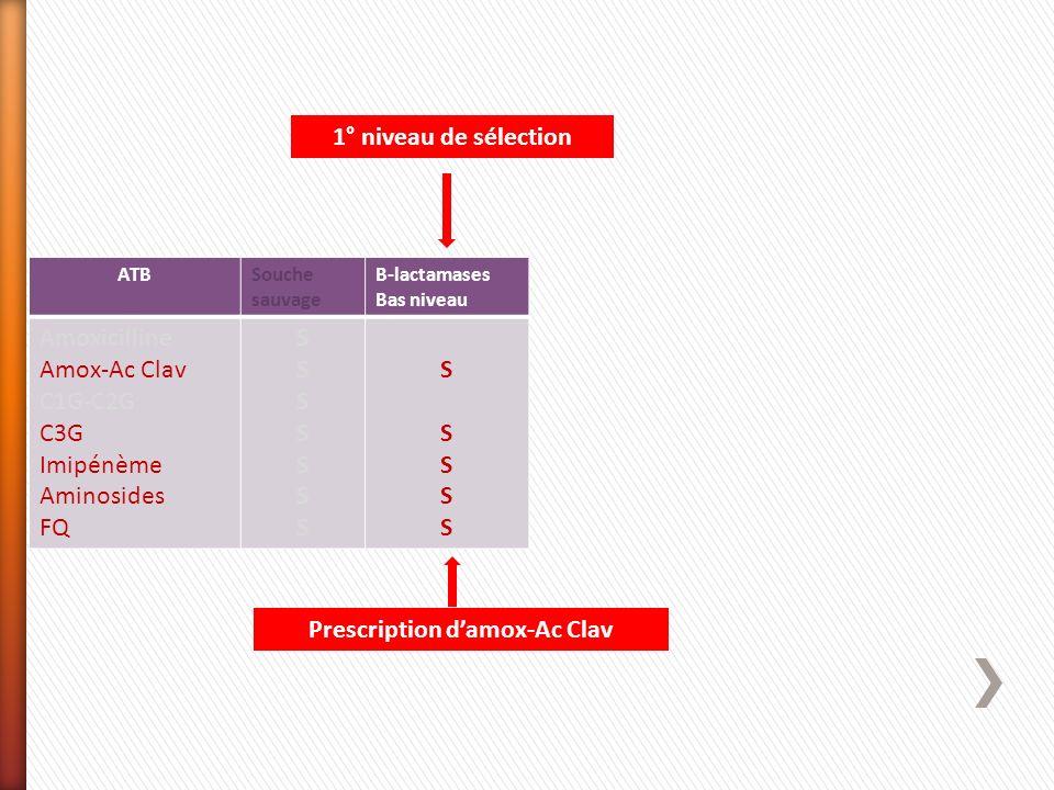 Prescription d'amox-Ac Clav