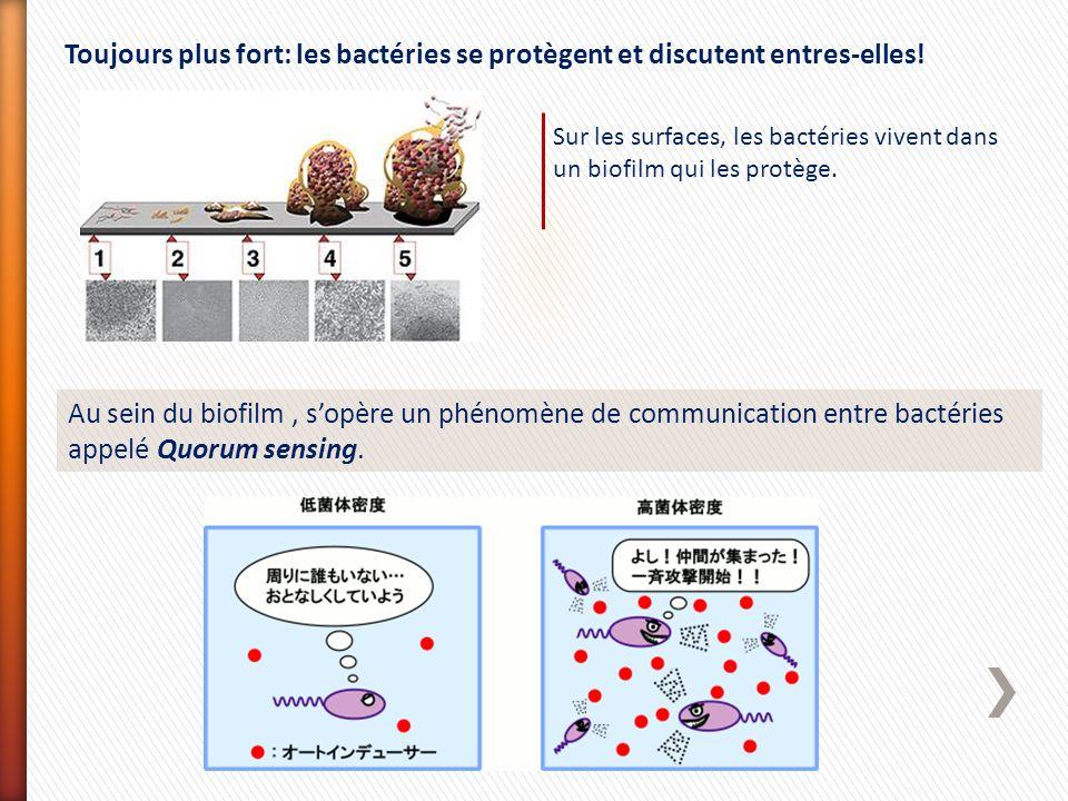 Toujours plus fort: les bactéries se protègent et discutent entres-elles!