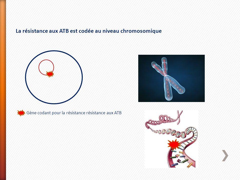 La résistance aux ATB est codée au niveau chromosomique