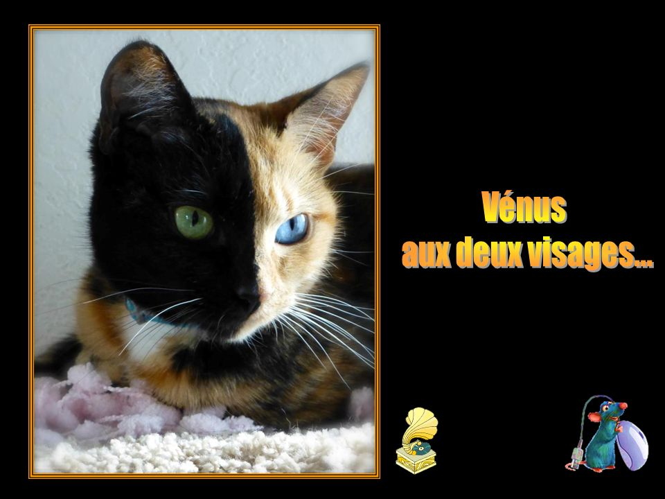 Vénus aux deux visages...