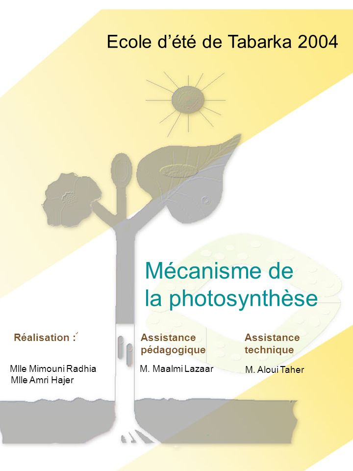 Mécanisme de la photosynthèse Ecole d'été de Tabarka 2004