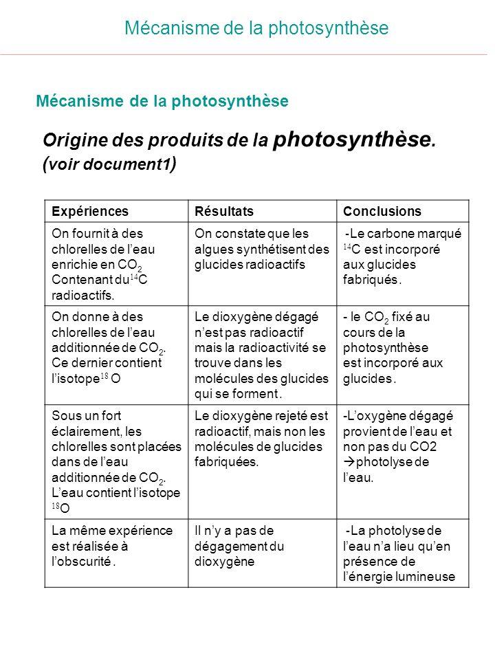 Origine des produits de la photosynthèse. (voir document1)