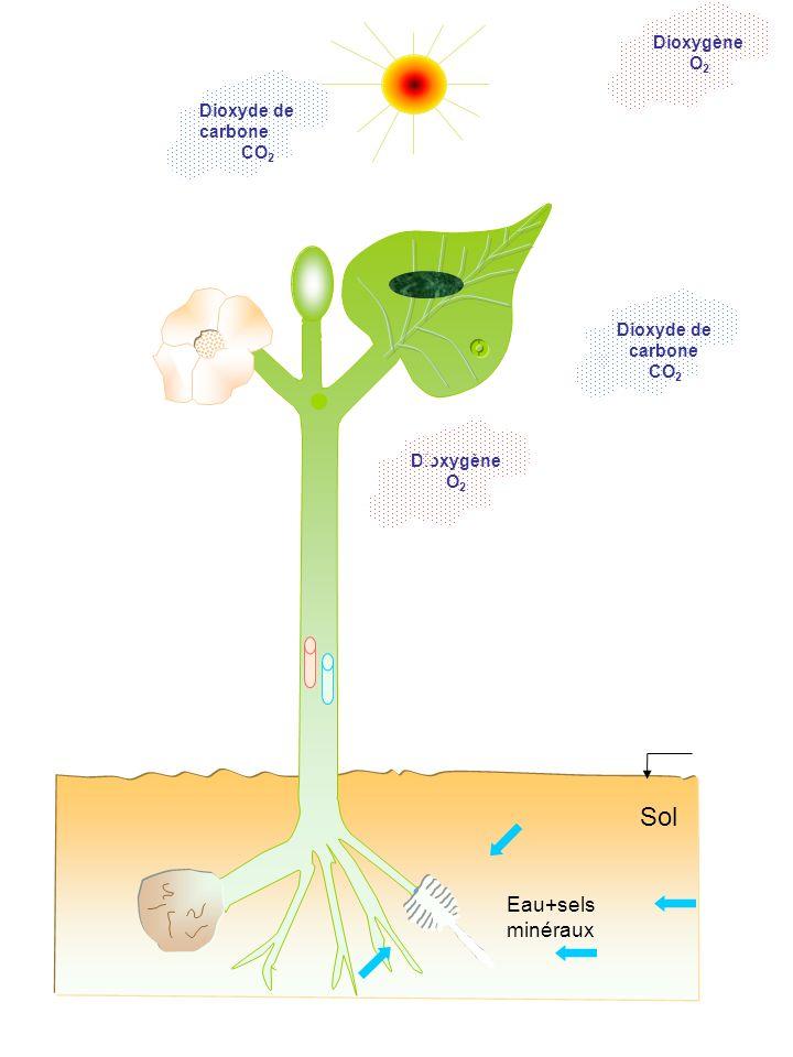 Sol Eau+sels minéraux Dioxygène O2 Dioxyde de carbone CO2