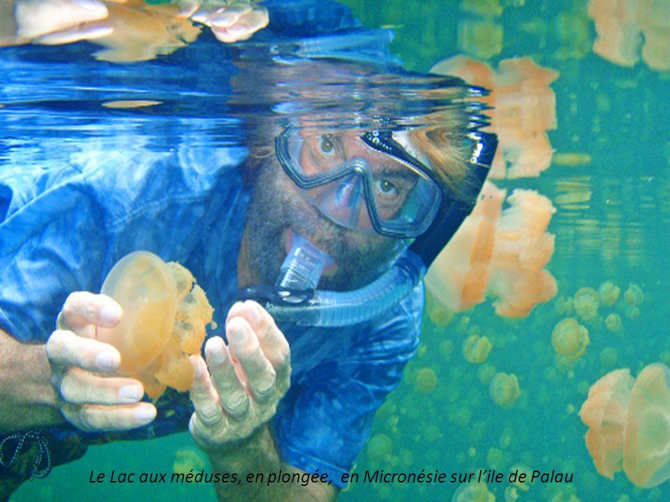 Le Lac aux méduses, en plongée, en Micronésie sur l'ile de Palau