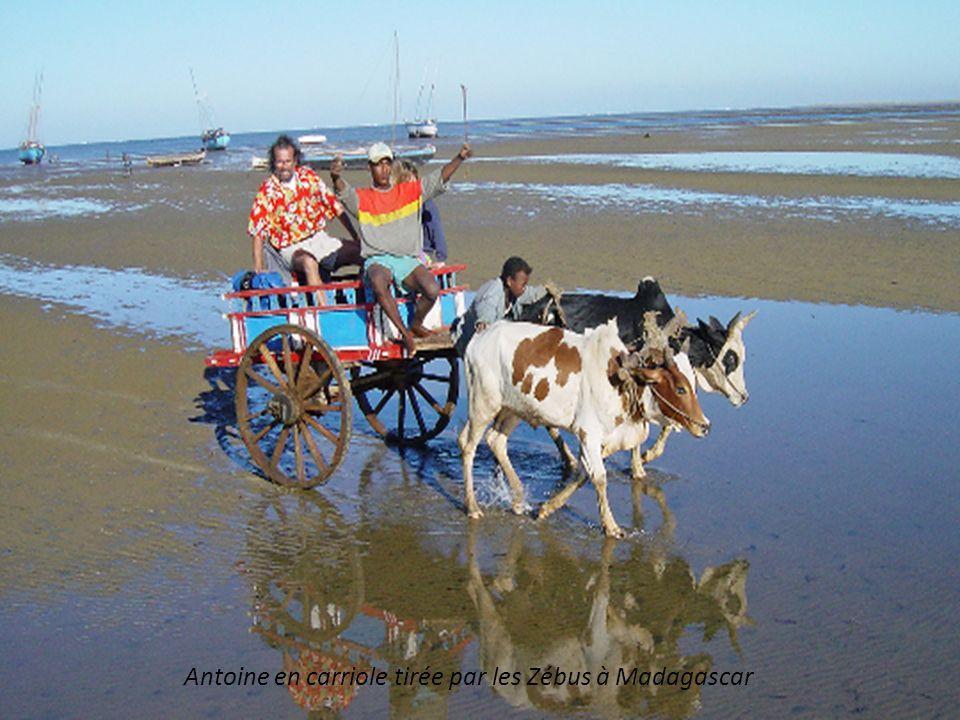 Antoine en carriole tirée par les Zébus à Madagascar