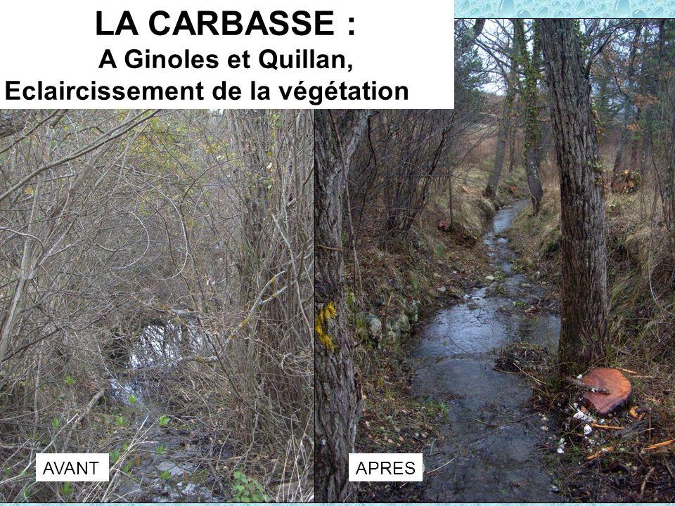 LA CARBASSE : A Ginoles et Quillan, Eclaircissement de la végétation