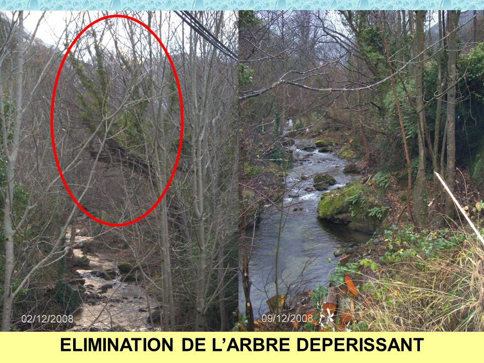 ELIMINATION DE L'ARBRE DEPERISSANT