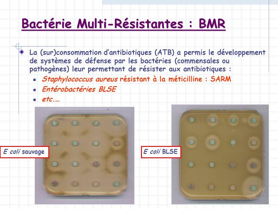 Bactérie Multi-Résistantes : BMR