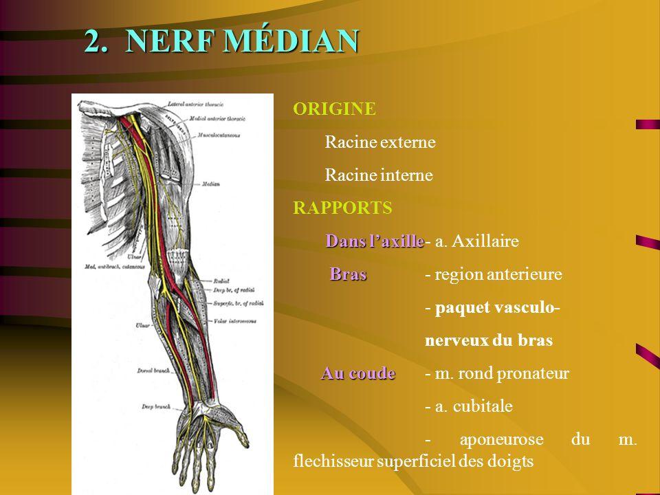 2. NERF MÉDIAN ORIGINE Racine externe Racine interne RAPPORTS