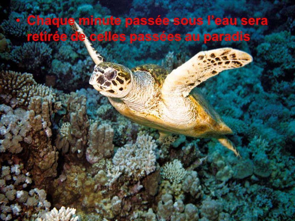 Chaque minute passée sous l'eau sera retirée de celles passées au paradis