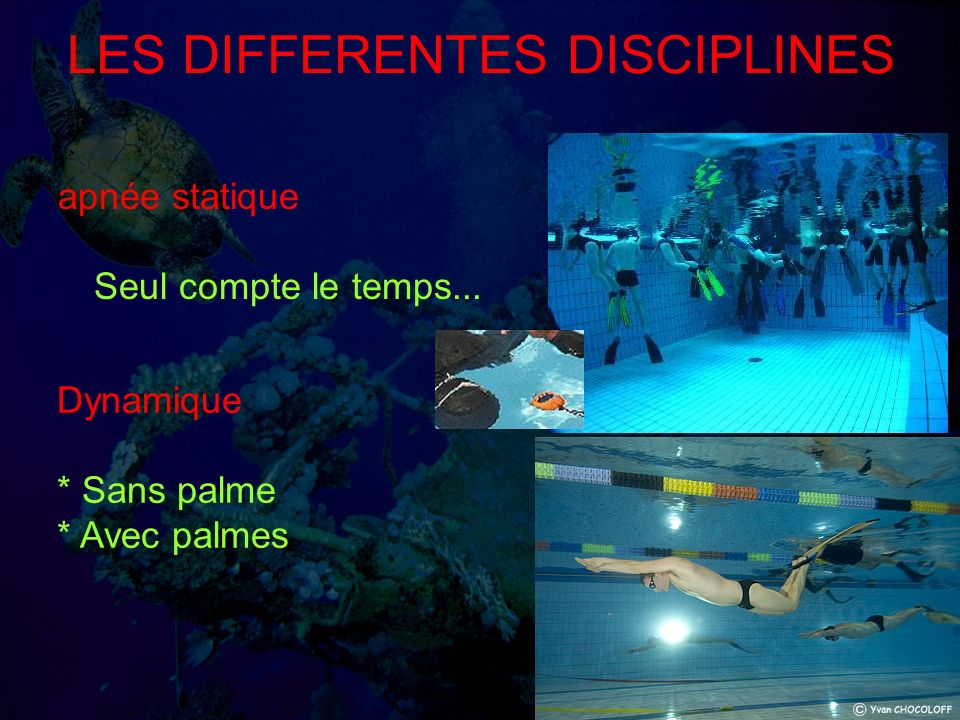 LES DIFFERENTES DISCIPLINES