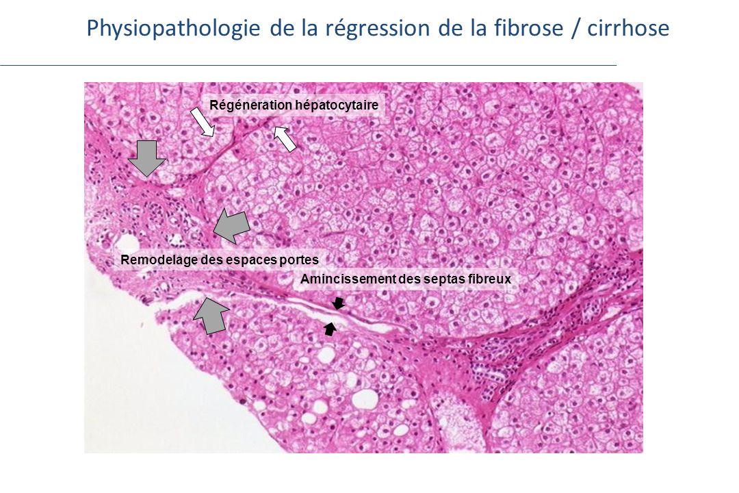 Physiopathologie de la régression de la fibrose / cirrhose