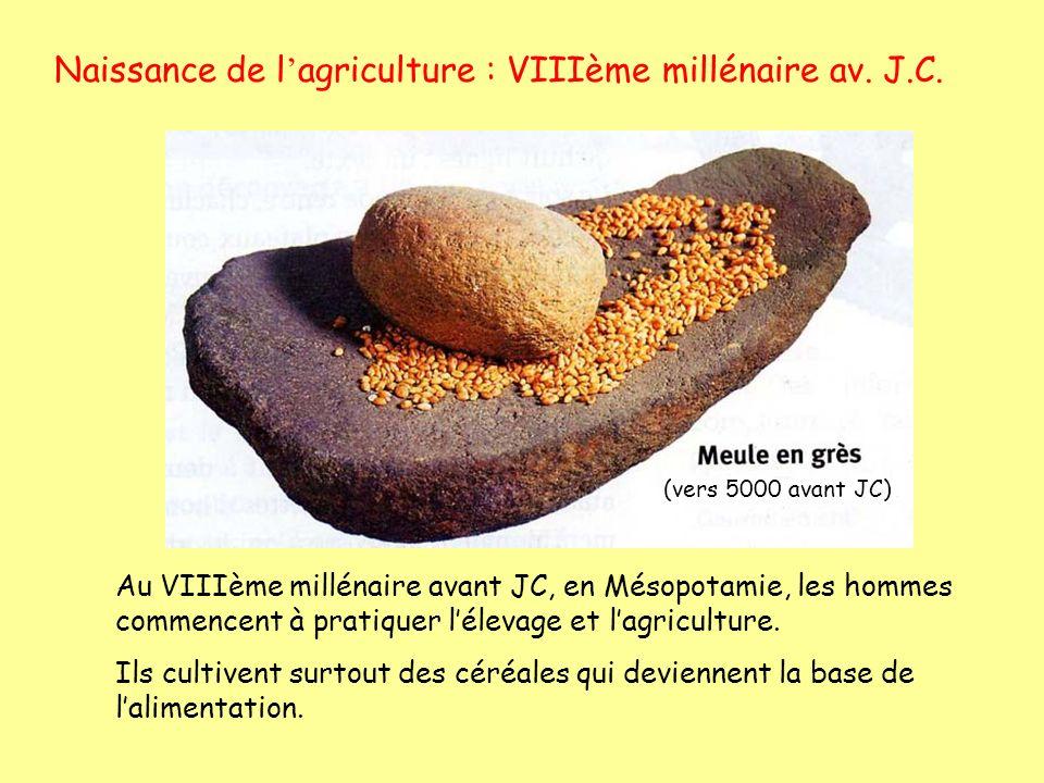 Naissance de l'agriculture : VIIIème millénaire av. J.C.