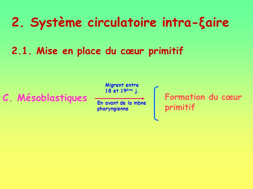 2. Système circulatoire intra-ξaire