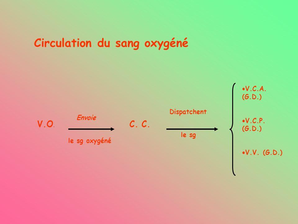 Circulation du sang oxygéné