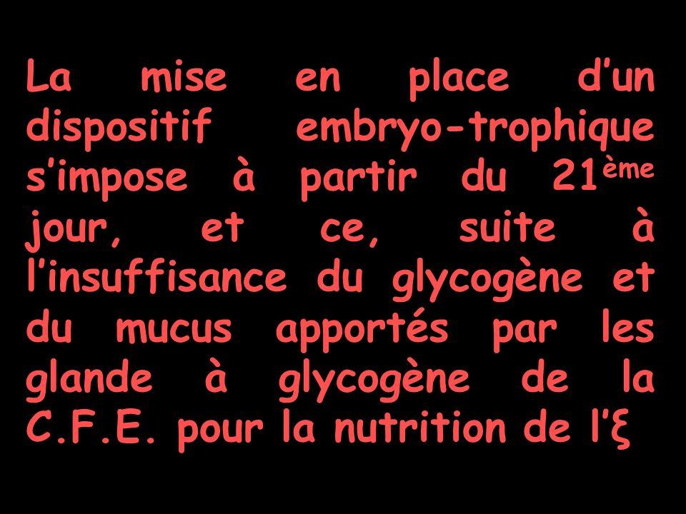La mise en place d'un dispositif embryo-trophique s'impose à partir du 21ème jour, et ce, suite à l'insuffisance du glycogène et du mucus apportés par les glande à glycogène de la C.F.E.