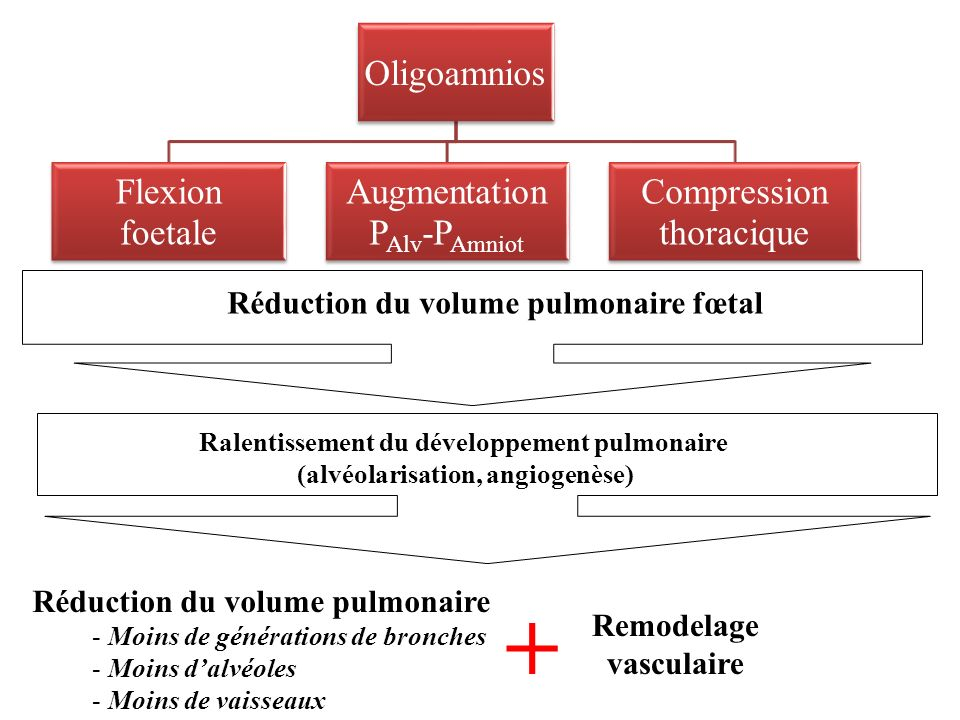 + Réduction du volume pulmonaire fœtal Réduction du volume pulmonaire