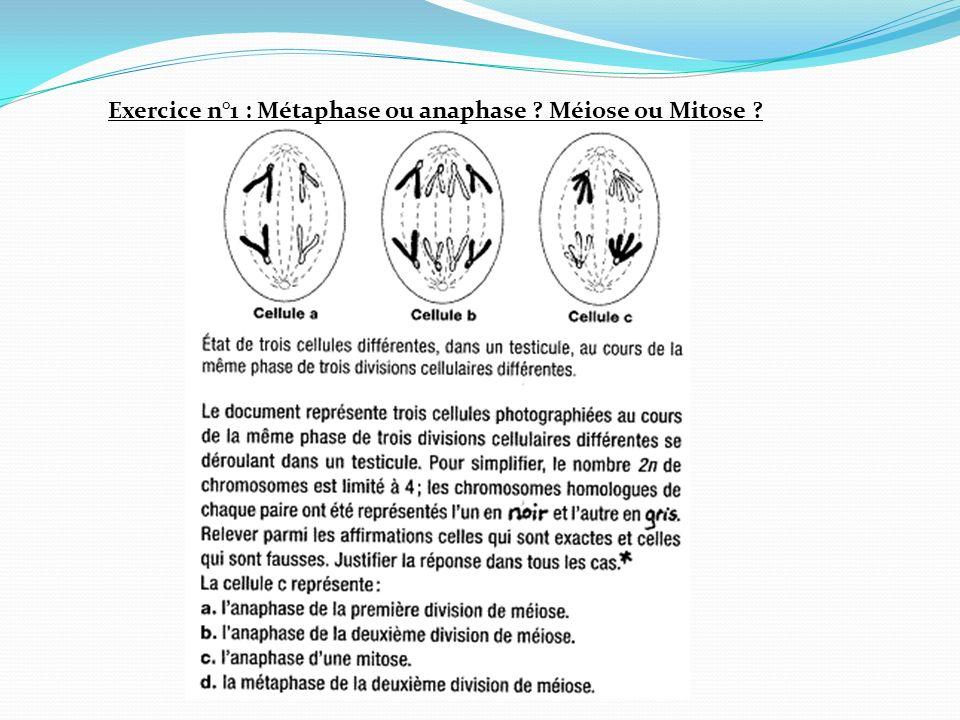 Exercice n°1 : Métaphase ou anaphase Méiose ou Mitose