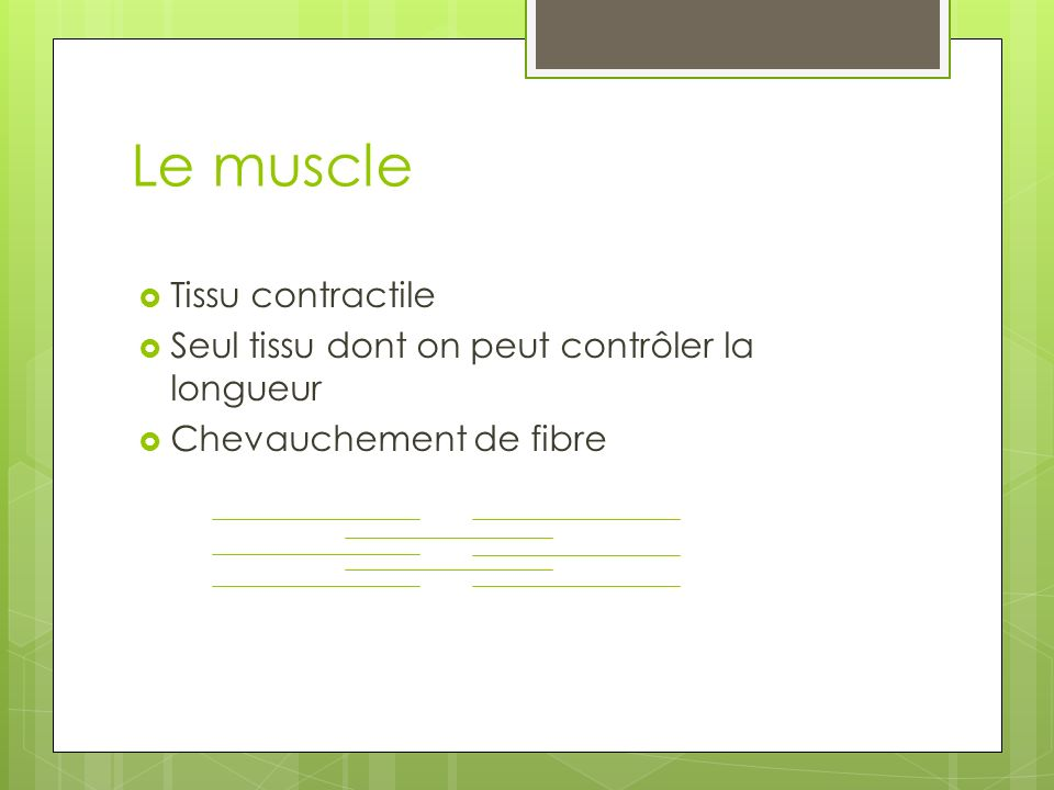 Le muscle Tissu contractile