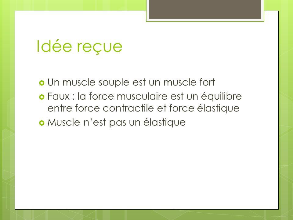 Idée reçue Un muscle souple est un muscle fort