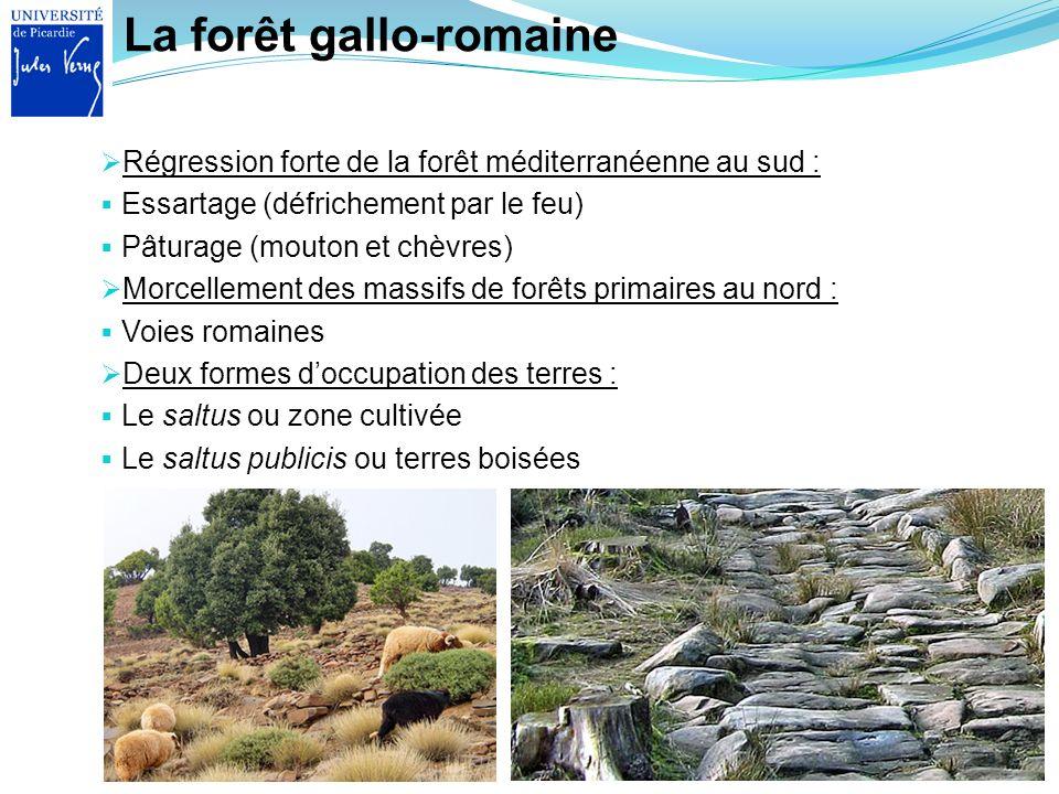 La forêt gallo-romaine