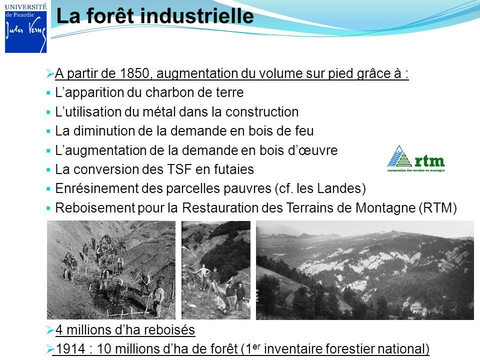 La forêt industrielle A partir de 1850, augmentation du volume sur pied grâce à : L'apparition du charbon de terre.