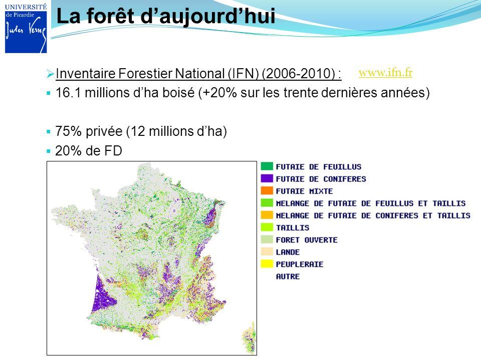 La forêt d'aujourd'hui