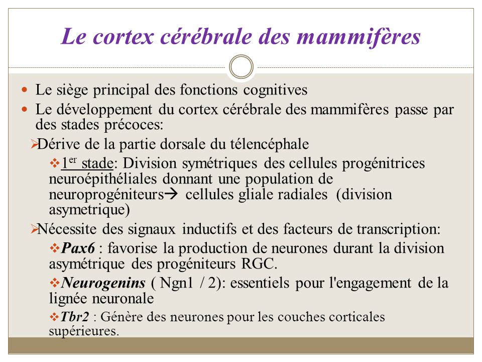 Le cortex cérébrale des mammifères