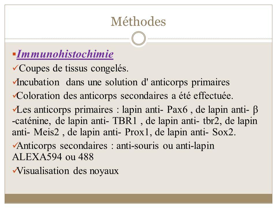 Méthodes Immunohistochimie Coupes de tissus congelés.
