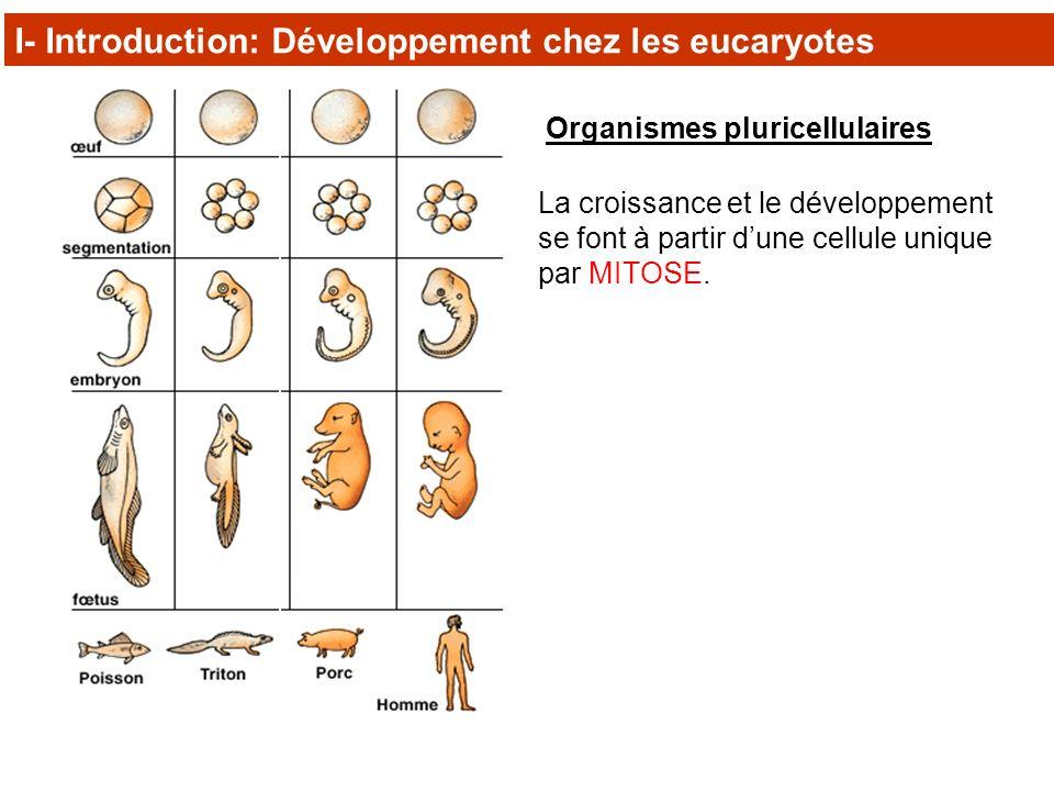 I- Introduction: Développement chez les eucaryotes