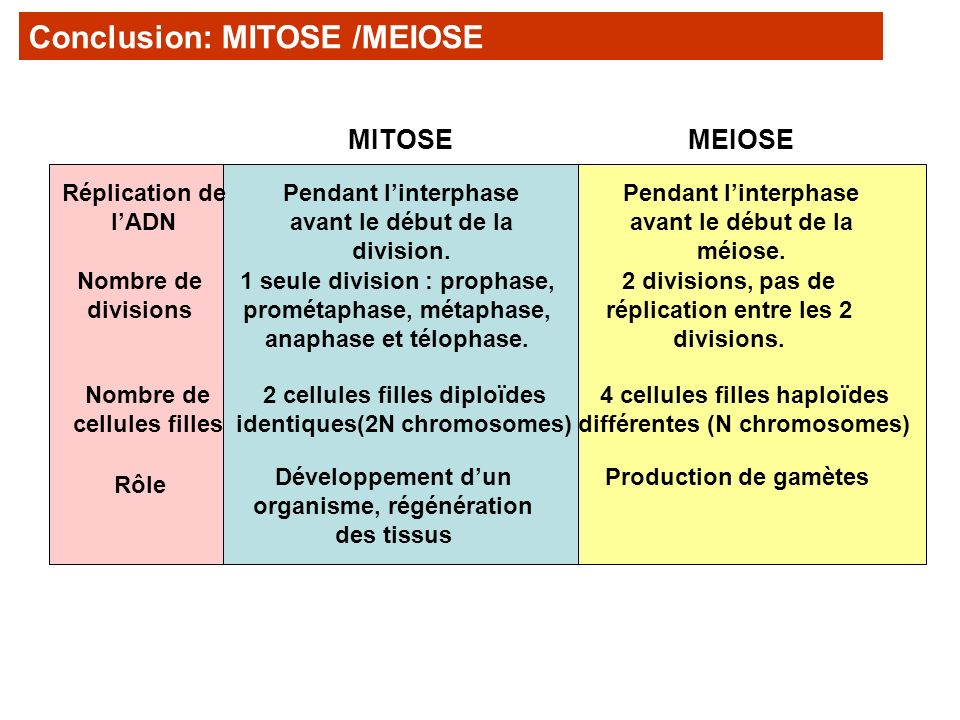 Conclusion: MITOSE /MEIOSE