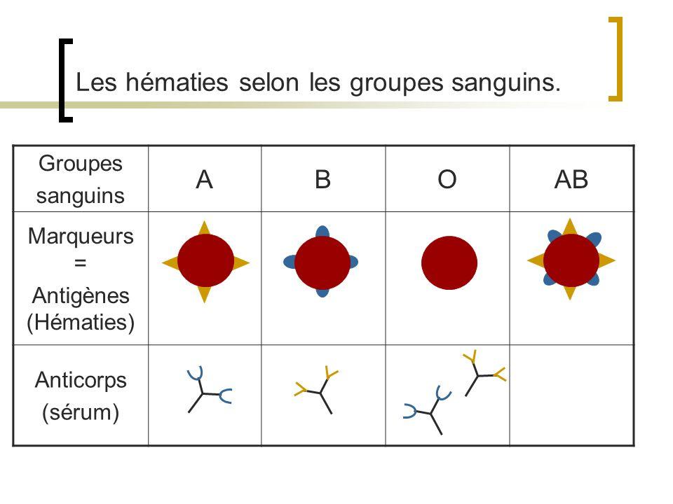 Les hématies selon les groupes sanguins.