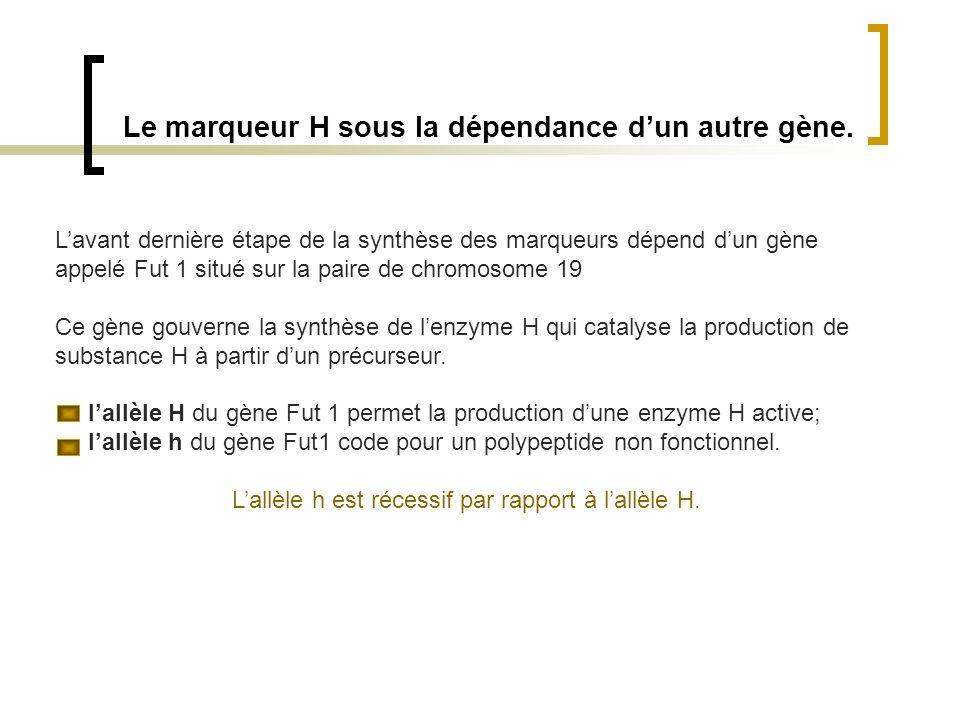Le marqueur H sous la dépendance d'un autre gène.