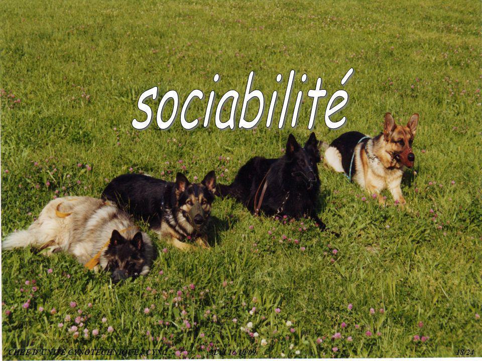 sociabilité CHEF D'UNITE CYNOTECHNIQUE – CYN 2 MAJ 16/10/09 18/24.