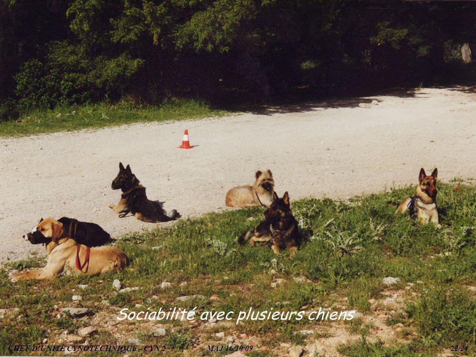 Sociabilité avec plusieurs chiens