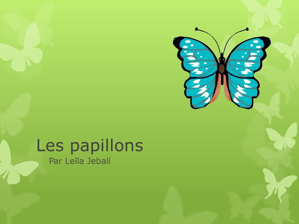 Les papillons Par Leïla Jebali