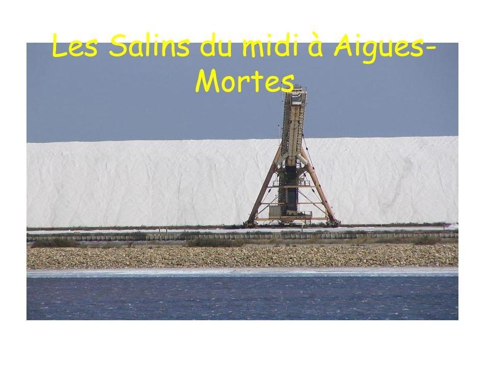 Les Salins du midi à Aigues-Mortes