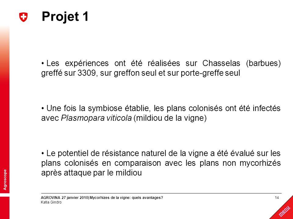 Projet 1 Les expériences ont été réalisées sur Chasselas (barbues) greffé sur 3309, sur greffon seul et sur porte-greffe seul.
