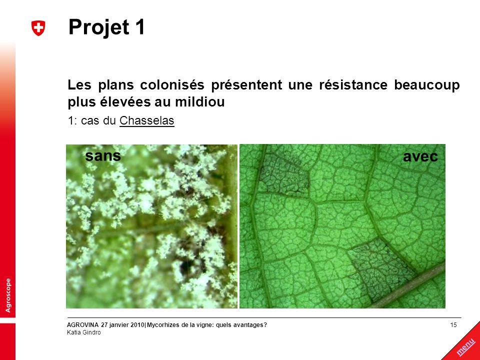 Projet 1 Les plans colonisés présentent une résistance beaucoup plus élevées au mildiou. 1: cas du Chasselas.