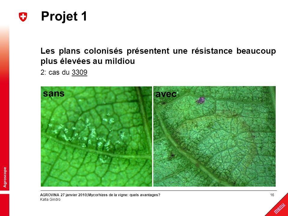 Projet 1 Les plans colonisés présentent une résistance beaucoup plus élevées au mildiou. 2: cas du 3309.