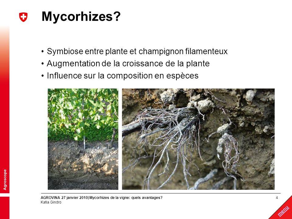 Mycorhizes Augmentation de la croissance de la plante