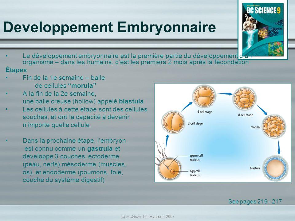 Developpement Embryonnaire
