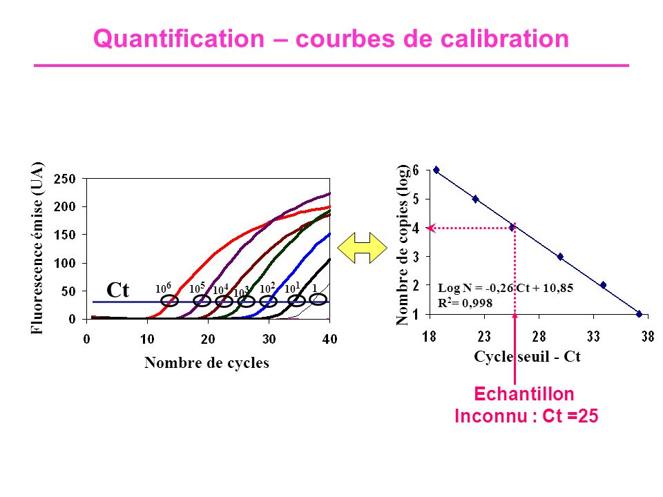 Quantification – courbes de calibration