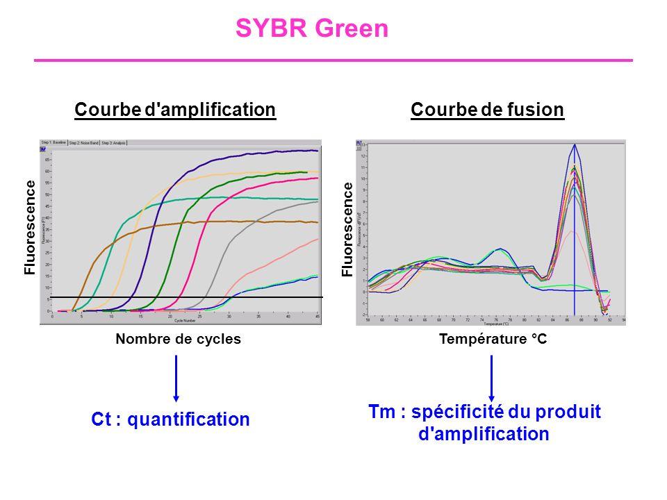 Tm : spécificité du produit d amplification