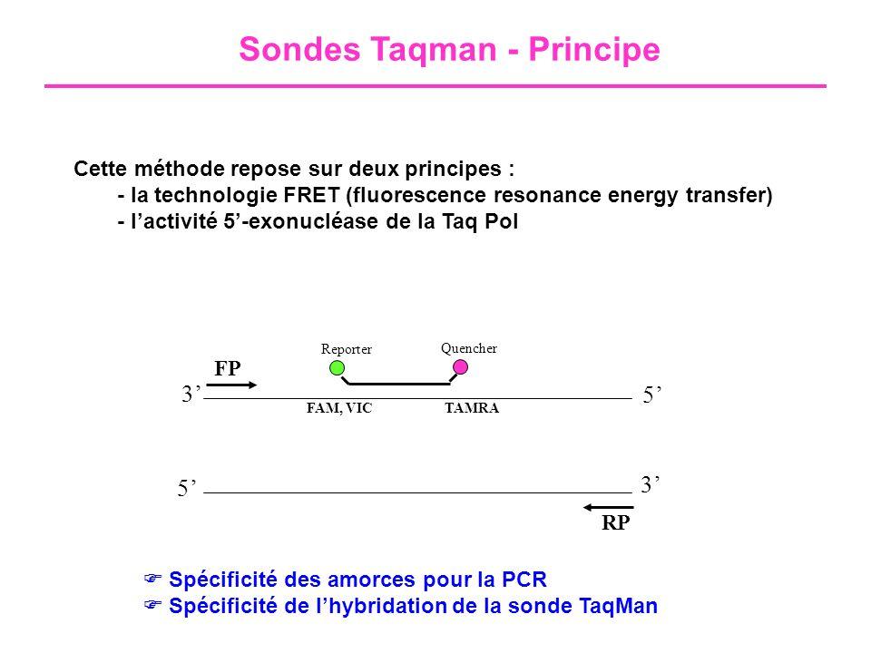 Sondes Taqman - Principe