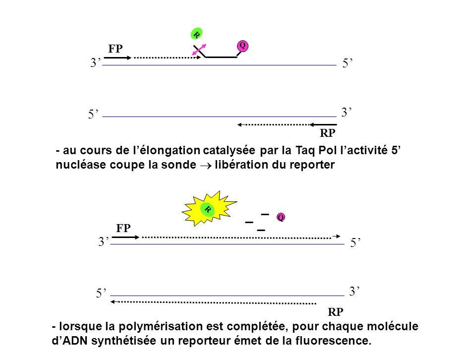 R FP. Q. 3' 5' 5' 3' RP. - au cours de l'élongation catalysée par la Taq Pol l'activité 5' nucléase coupe la sonde  libération du reporter.